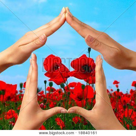 Damen Hände zeigt Startseite Zeichen über Mohn rot Sommer Feld konzeptionelle isoliert mit Beschneidungspfad