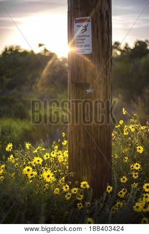 Flowers sprawl across the landscape next to an electrical pole