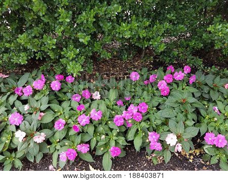 pink flower petals and a green bush