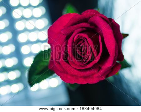Low key of Valentines Day background-red rose with light bokeh