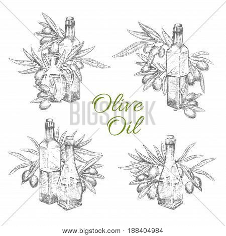 Olive oil and olives sketch icons set. Vector isolated symbols of green or black olives and bottles or jars with extra virgin oil. Design for fresh organic cooking oil product and healthy cuisine