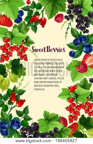 Berries vector poster of strawberry, blueberry and cranberry, black currant or redcurrant and sweet garden raspberry, juicy wild briar berry and gooseberry for berry shop or farmer market