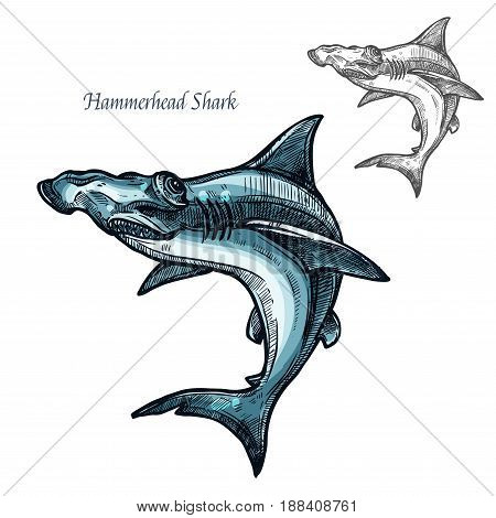 Hammerhead shark sketch vector fish icon. Isolated ocean predatory winghead shark fish species. Isolated fauna and zoology symbol or emblem for fishing club or fishery market poster