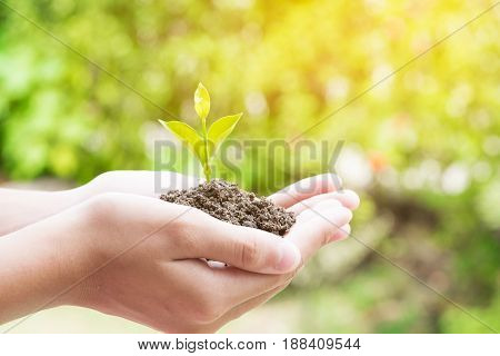 Teen hands planting the seedlings into the soil over nature background and sunlight. Farmer holding Young plant new life growth. Ecology money saving development or business concept.