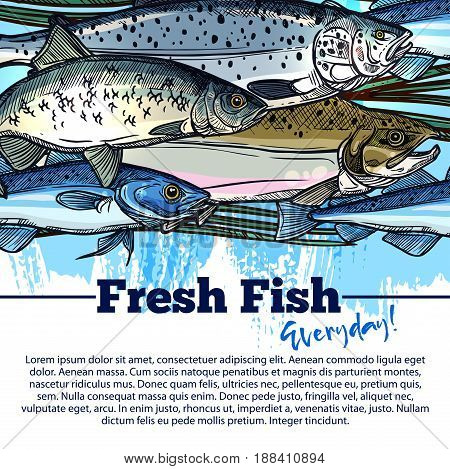 Seafood and fish catch poster. Vector design of fisherman salmon and tuna or herring and trout, pike and carp or flounder and sheatfish for fishing sea food market or restaurant menu template