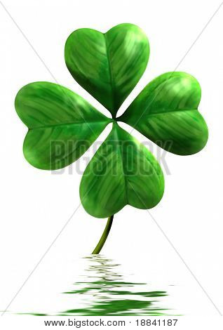 Four-leafed shamrock with reflection in water Symbol of luck and Saint Patrick Day holiday Isolated on white background