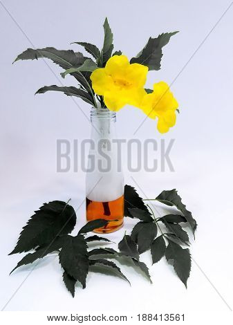 Glass Vase with Beautiful Bright Yellow Flowers with Faded Leaves