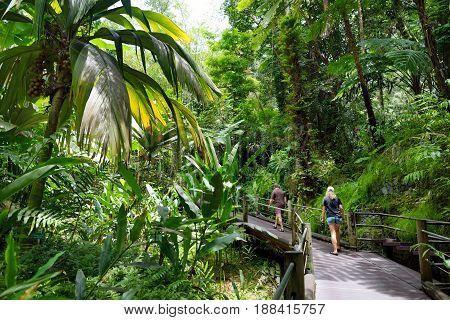 Tourist Admiring Lush Tropical Vegetation Of The Hawaii Tropical Botanical Garden Of Big Island Of H