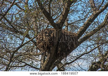 Tree Branches And Bird Nest Against Blue Sky