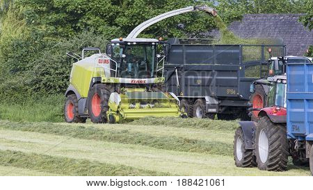 TOCKENHAM UK - MAY 24 2017: Claas Jaguar Forage harvester picking up grass and putting in a trailer for it to be taken to make silage