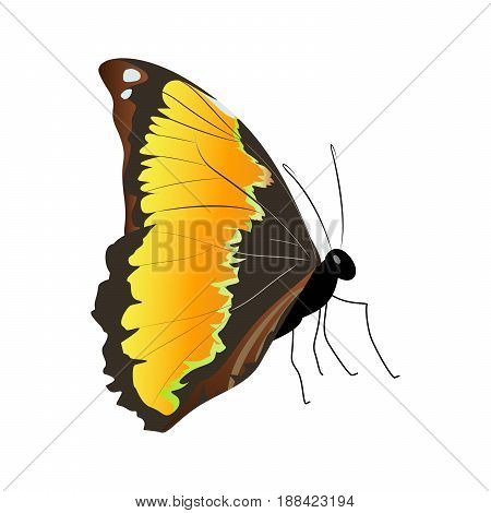 Isolated beautiful butterfly on white background. Orange colors. Side view.