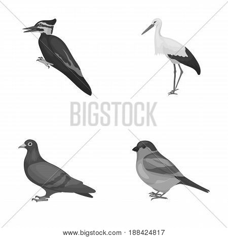 Woodpecker, stork and others. Birds set collection icons in monochrome style vector symbol stock illustration .