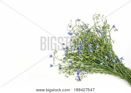 Bouquet with wild flowers isolated on white background.