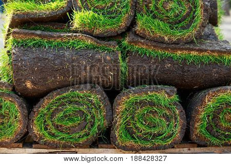stacks of sod rolls for new lawn