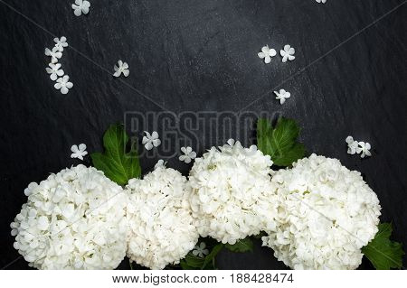 Viburum flowers and card for text on black stone background. Space for text.