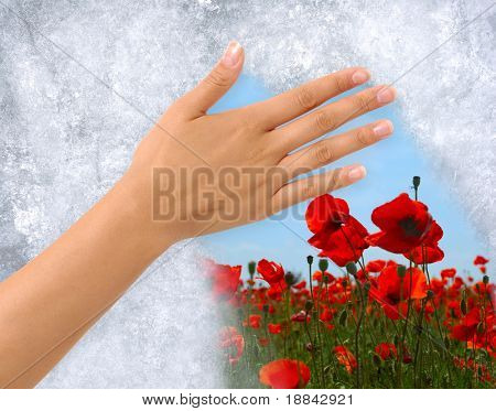 Hand removing Ice from a frozen window revealing field of flowers behind. Clipping path around the hand included. poster