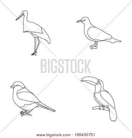A stork, a seagull and various species. Birds set collection icons in outline style vector symbol stock illustration .