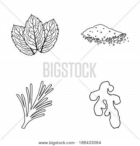 Mint, basil, root of ginger, paprika.Herbs and spices set collection icons in outline style vector symbol stock illustration .