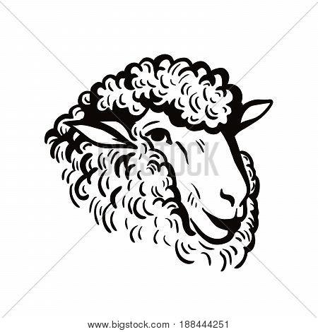 farm animals. sheep head sketch on white background