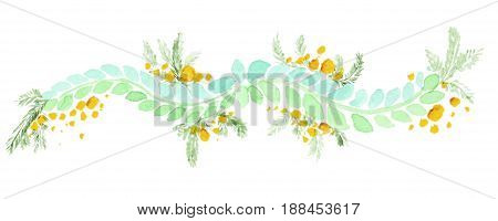 Watercolor mimosa isolated on white background. Mimosa branch, Leafs and flowers. Perfect for wedding or greeting card.
