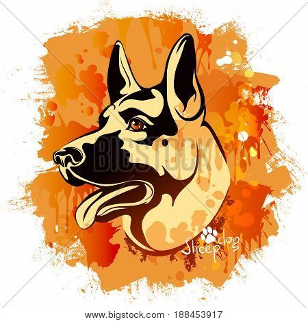 vector illustration, watercolor drawing of a head of a dog of the breed of a Sheepdog on a colored background