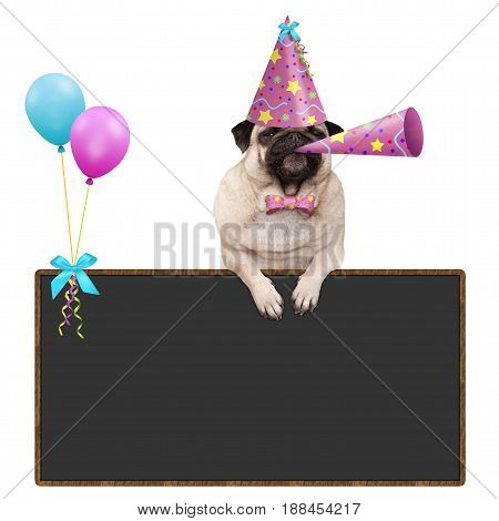 adorable pug puppy dog hanging with paws on blank blackboard sign with balloons and wearing pink party hat isolated on white background