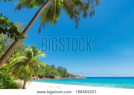 Beautiful palm trees on white sand beach in tropical island.