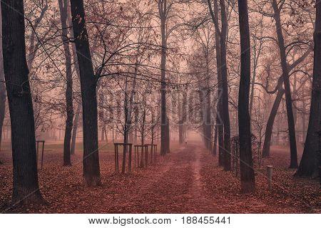 Autumn Misty Park In Parma