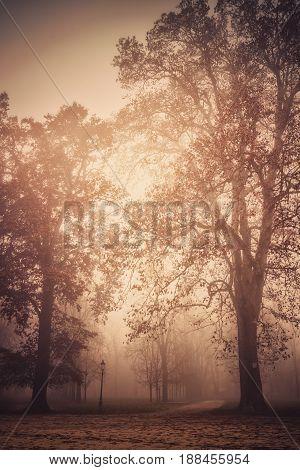 Autumn Foggy Park