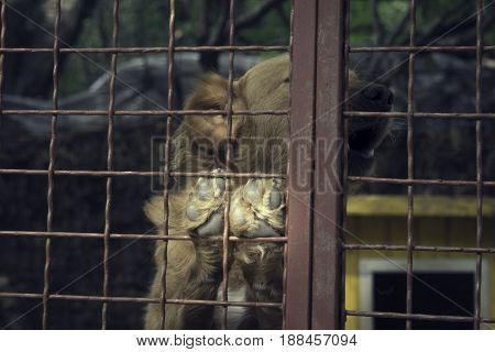Homeless dog in dog's shelter behind a fence
