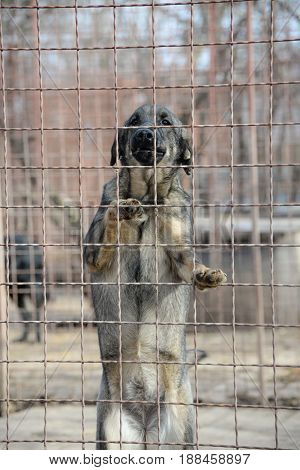 Stray dog in dog's shelter waiting for adoption