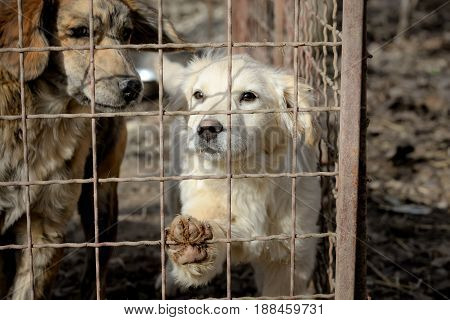Dogs from shelter in his box behind a a fence