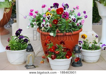 Decorative flowers in pots and small glass lanterns