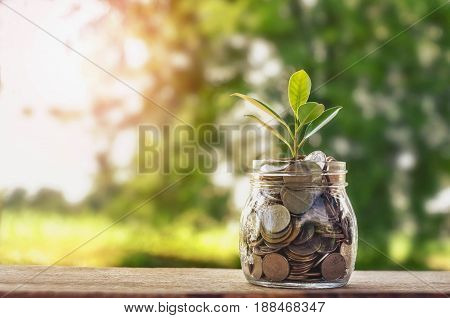 Plant growing on Coins glass jar and concept money saving coins