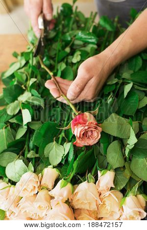 Flowers delivery, creating order. Male florist hands closeup, cuts rose for bouquet in flower shop.
