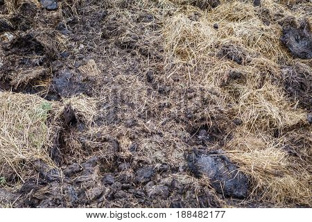 Pile of manure for field fertilization. Farming and field maintenance.