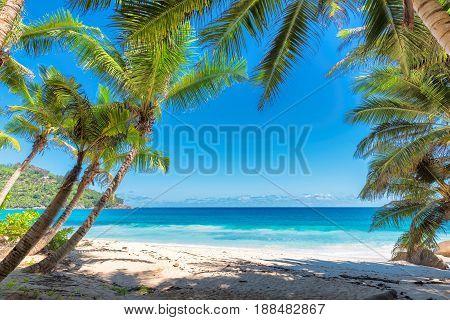 Beautiful beach with Palm trees on tropical island.