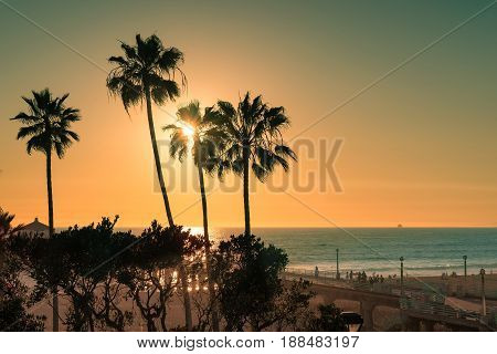 Palm trees on Manhattan Beach and Pier at sunset in Southern California.