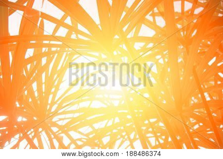 Up view Papyrus leaf abstract background - Yellow Orang filter style