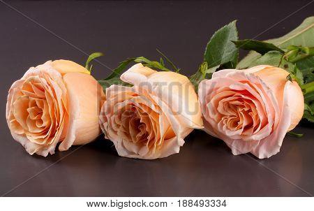 three fresh beige roses on a dark wooden background.