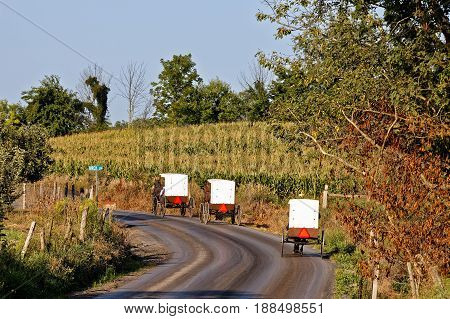Amish horse drawn carriages round a bend on a rural road in Mifflin County Pennsylvania USA. Carriages with white tops and brown bottoms are a common sight in this area.