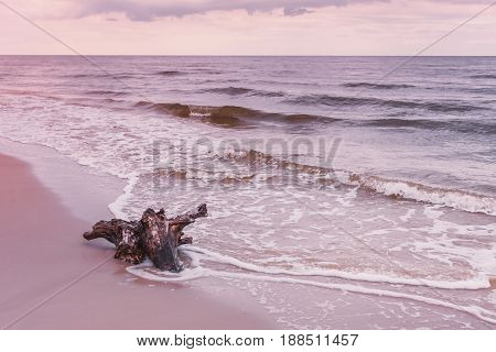 Tree Root On Sea Shore, Nature Landscape