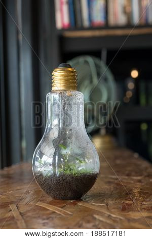 Terrarium plant in lamp on wood table. In Closeup.