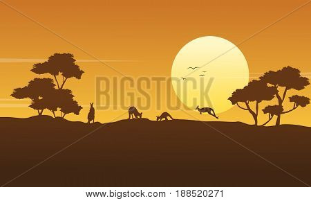 Scenery kangaroo beauty collection stock vector illustration