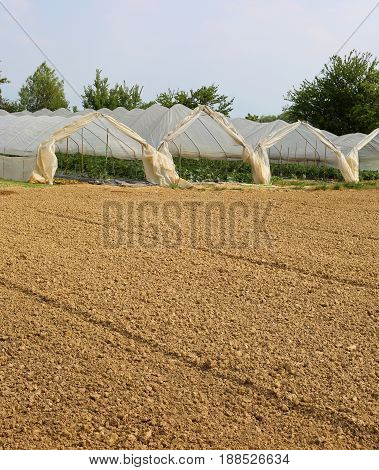 Greenhouses For The Cultivation Of Vegetables In The Winter