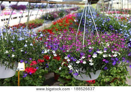 Flowers In Pot Inside A Nursery
