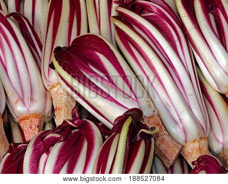 Background Of Red Radicchio Havested In The Po Valley In Italy I