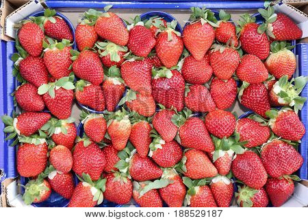 Many Baskets Ripe Red Strawberries Grown Using The Techniques Of