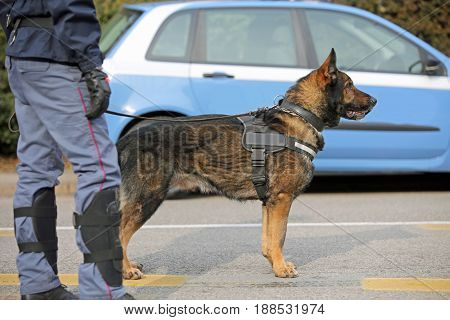 Dog Canine Unit Of The Police For The Detection Of Explosive Material