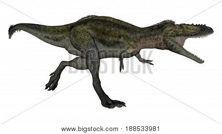 Alioramus dinosaur running and roaring isolated in white background - 3D render